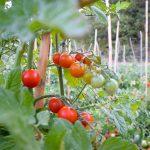 Prodotti Bio - La Conserva