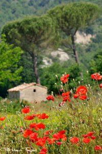Escursioni in Toscana